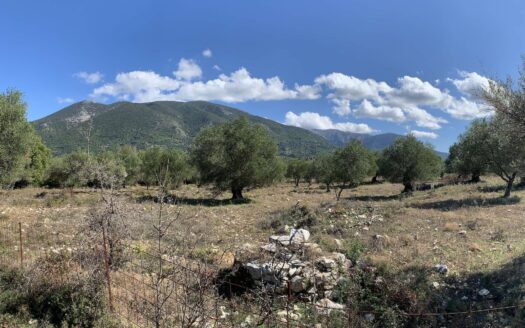 Sami area olive grove for sale
