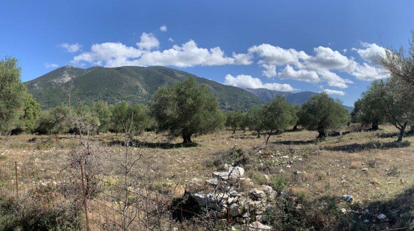 Sami area olive grove for sale