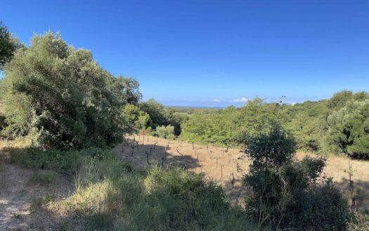 Spartia Hills Plot for Sale